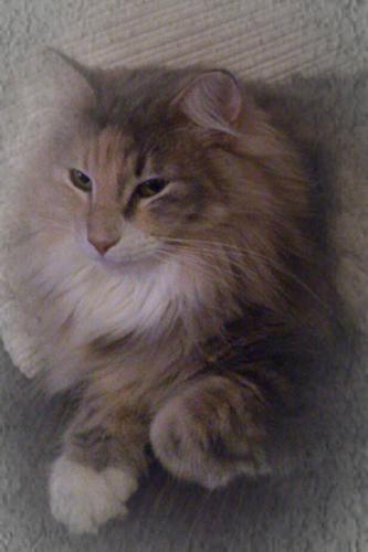 Nubia de Noldor*ES (Desiertos 2011) 2 años y 3 meses en la foto