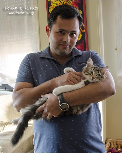 11 de Agossto de 2014 - Kenaz (camada Runen) Vivirá en Salvador de Bahía como fundidora del criadero Waldkatze*BR