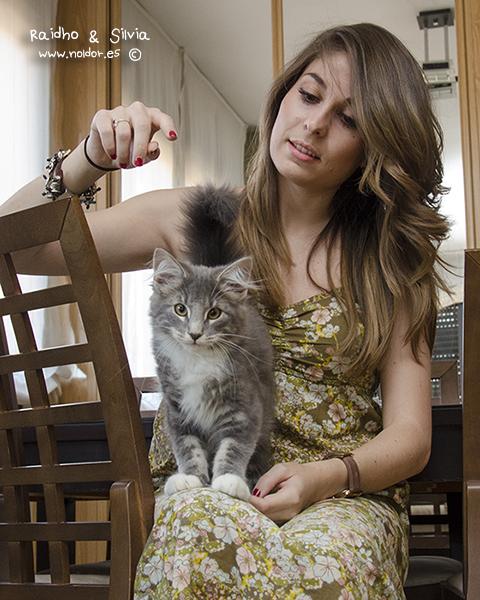29 de Julio de 2014 - Raidho (camada Runen) Vive con Michael de Noldor*ES (2009) siendo el mimado de humanos y gato