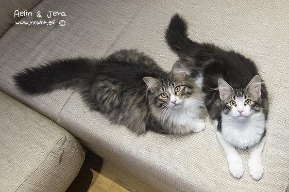 13 de Agosto de 2014- Aelin y Jera (camada Khazad-Dûm y Runen) Juntas vivirán en USA en el criadero NorseStar